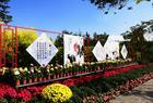 邛海三期湿地烟雨鹭洲菊花展,随拍美丽的花花们,享受西昌美好的生活!